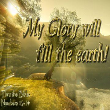 My Glory