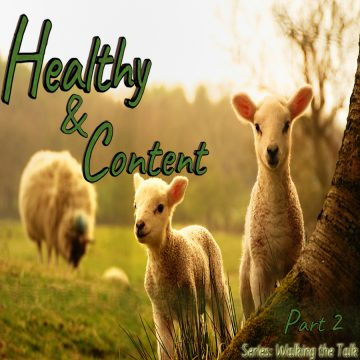 Content Sheep