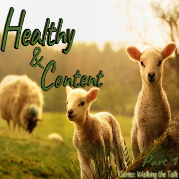 Healthy Content sheep